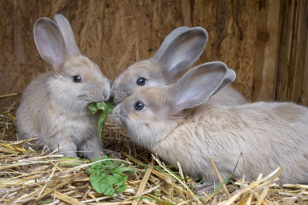 У кролика паралич задних лап - уход