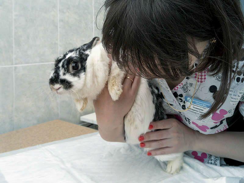 ВГБК у кролика - карантин