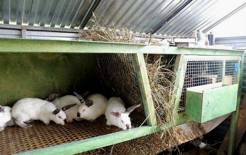 ВГБК у кроликов - дезинфекция