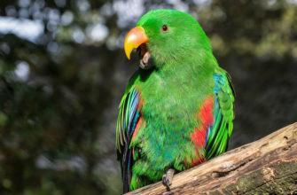 Зеленые попугаи - главное фото