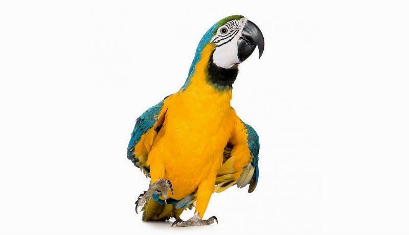 Главное фото - попугай ара