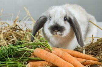 Чем кормить домашних кроликов