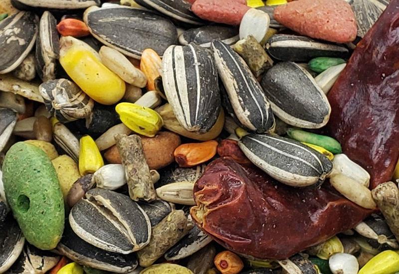 Чем кормить попугаев - зерновая смесь