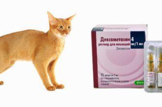 Дексаметазон для кошек