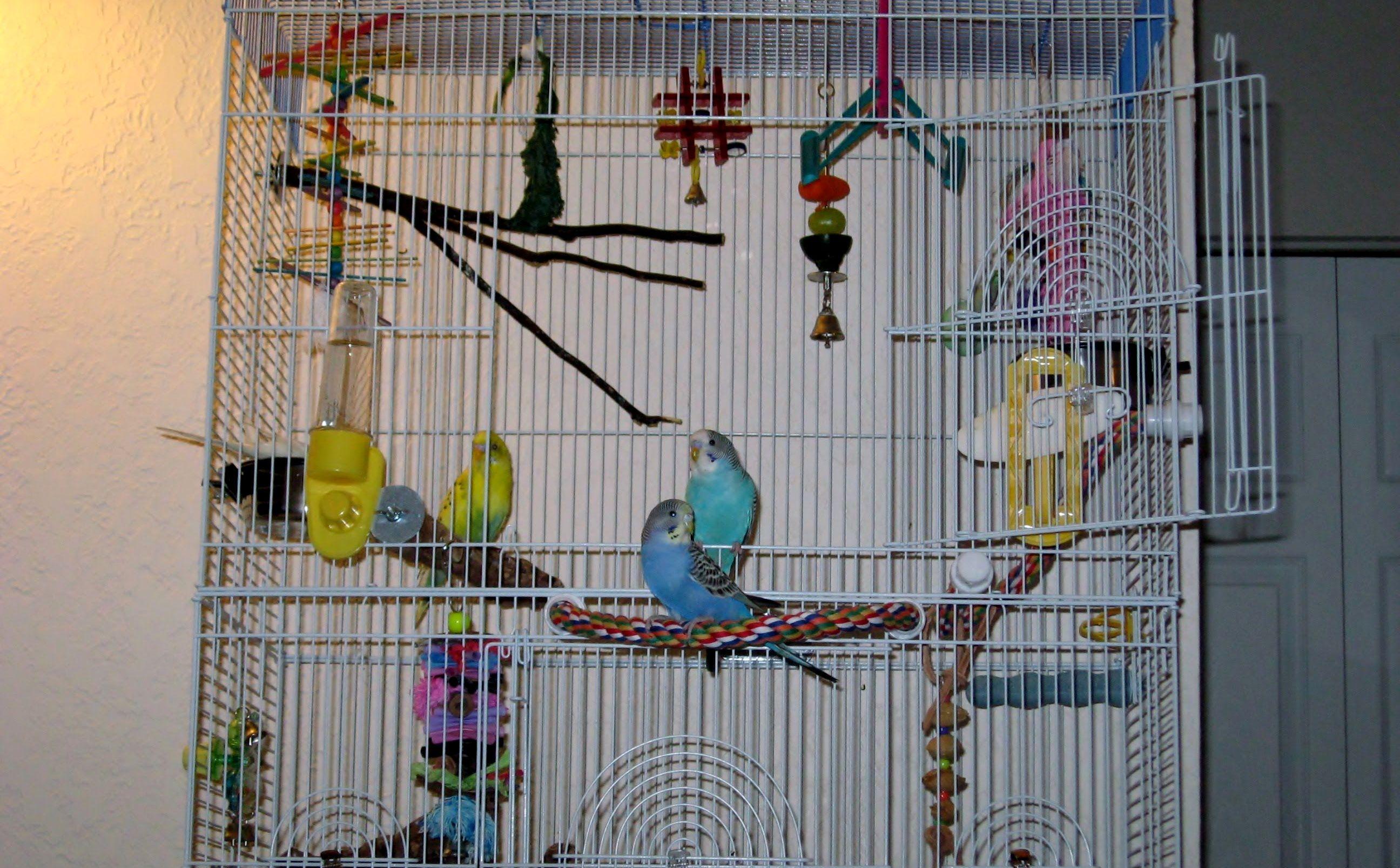 Просторная кетка для волнистых попугаев