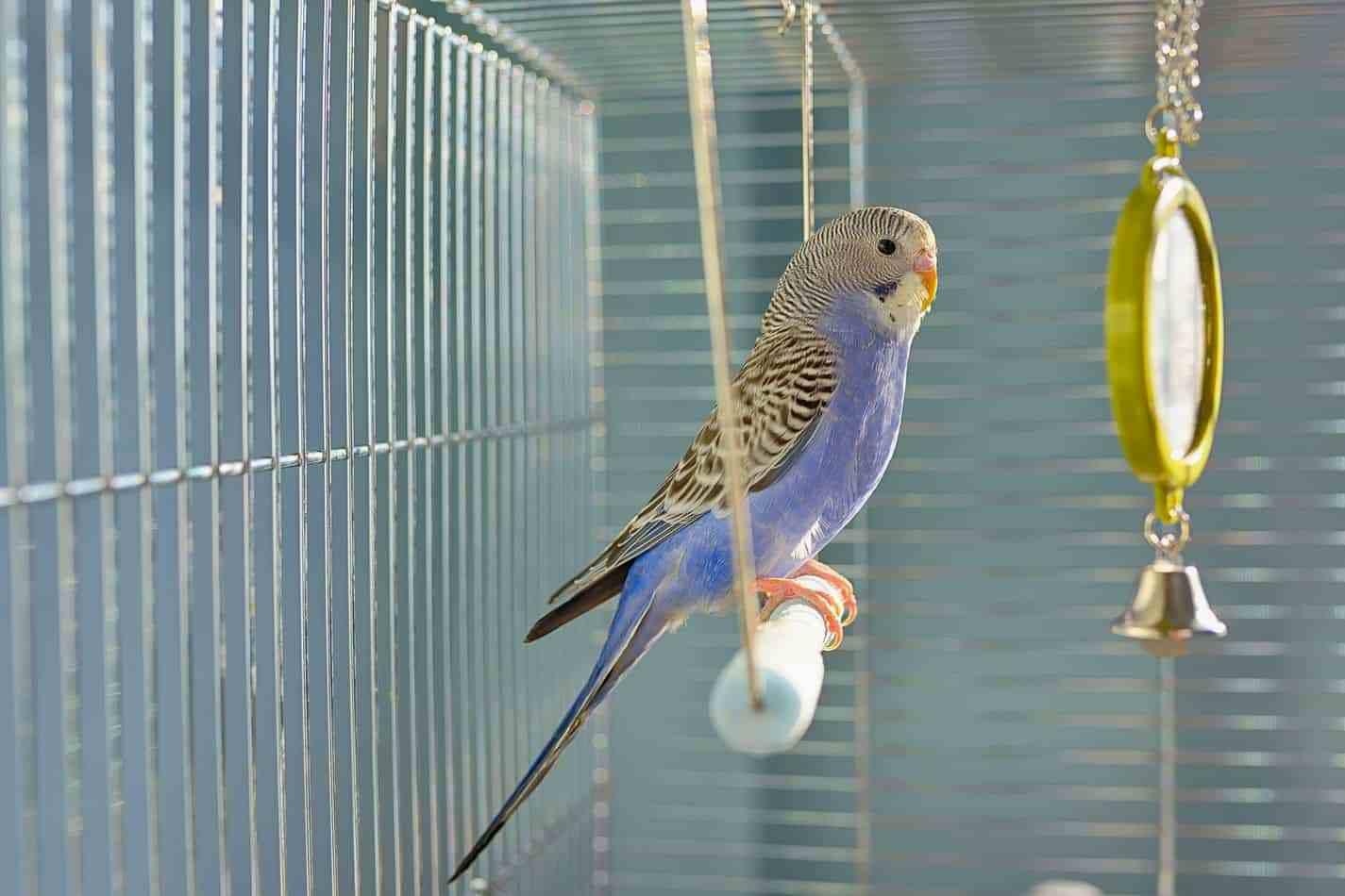 Клетка для волнистого попугая - зеркало