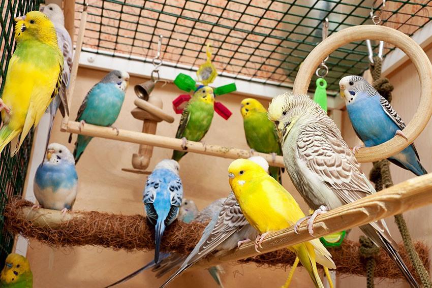 Клетка для волнистого попугая - игрушки