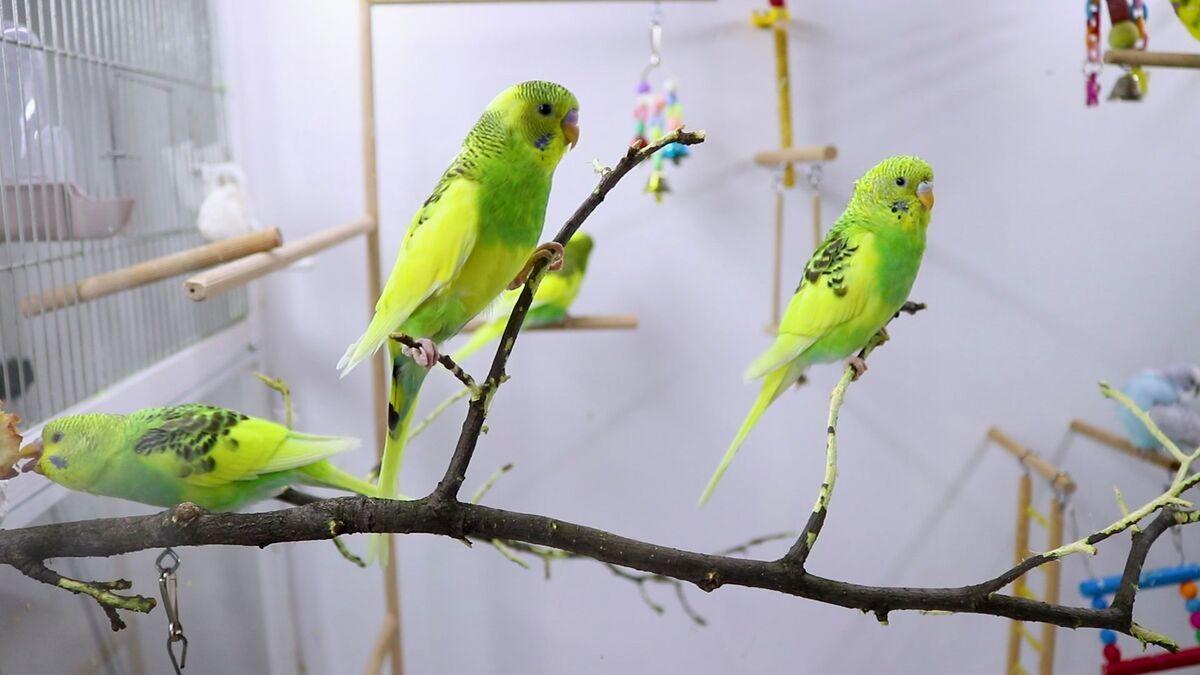 Клетка для волнистого попугая - жердочки