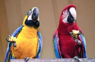 Имена для попугаев - мальчиков и девочек