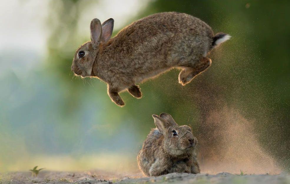 Интересные факты о кроликах - физиология