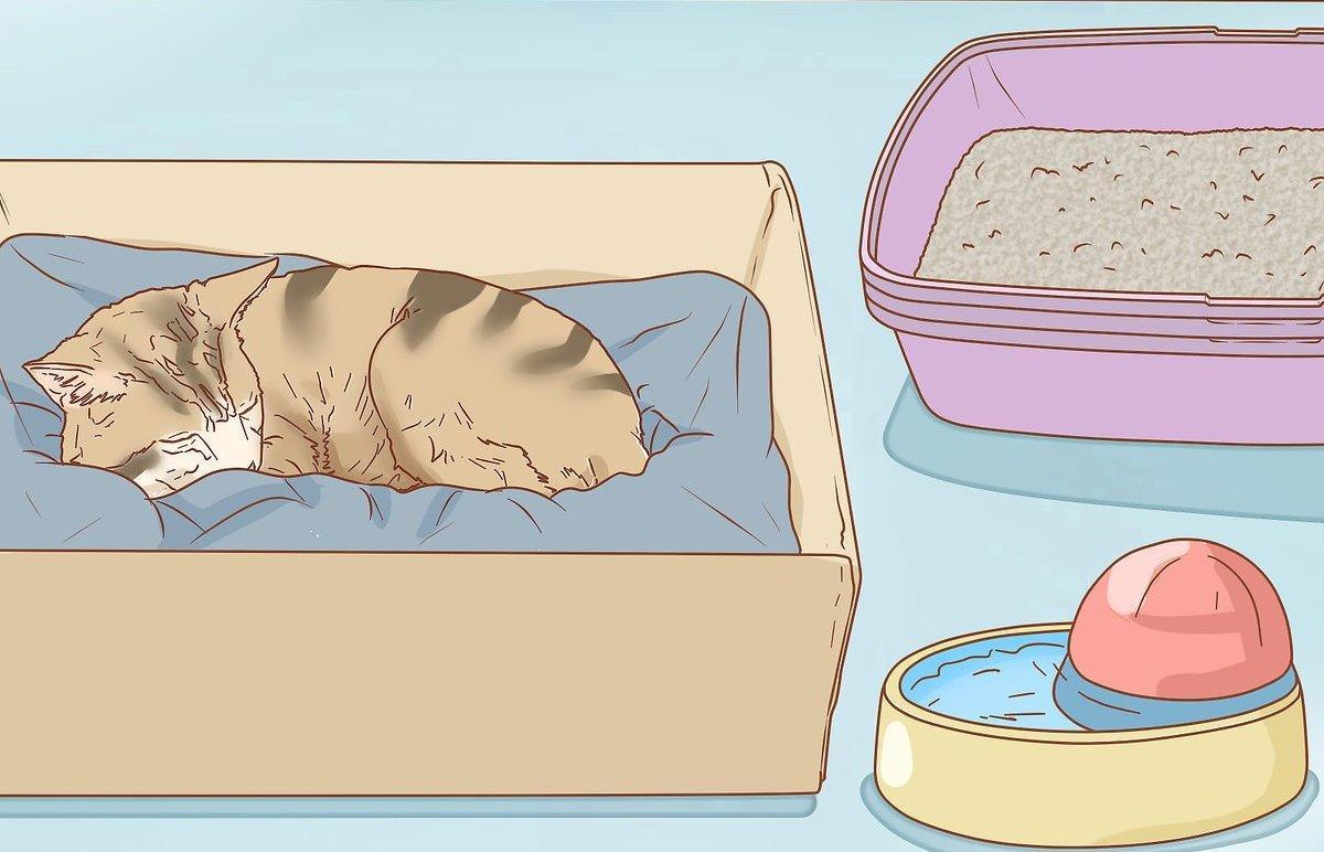 Расчет даты родов у кошки