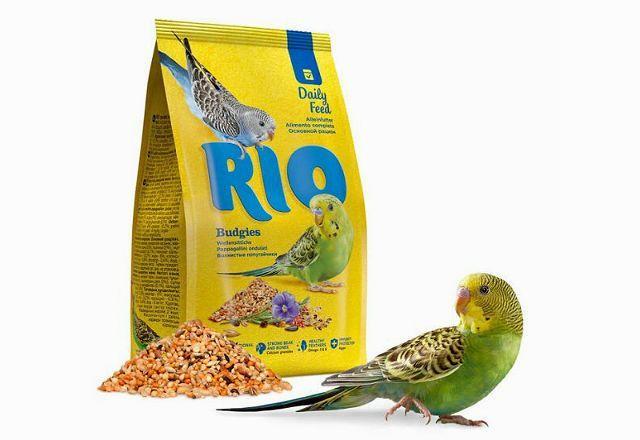 Rio Daily feed