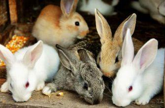 Кормление молодняка кроликов - главное фото