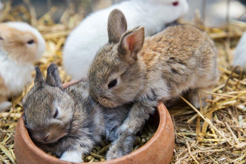 Кормление молодняка кроликов от 20 дней