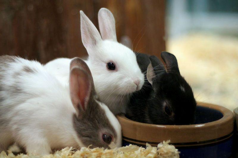 Кормление молодняка кроликов