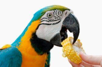 Овощи для попугаев - главное фото