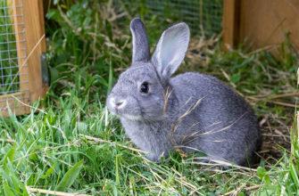 Разведение кроликов в домашних условиях - главное фото