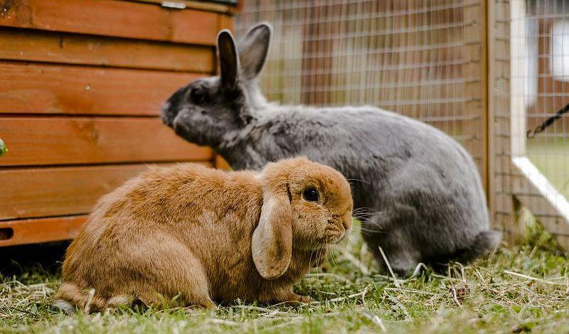 Клеточное содержание кроликов