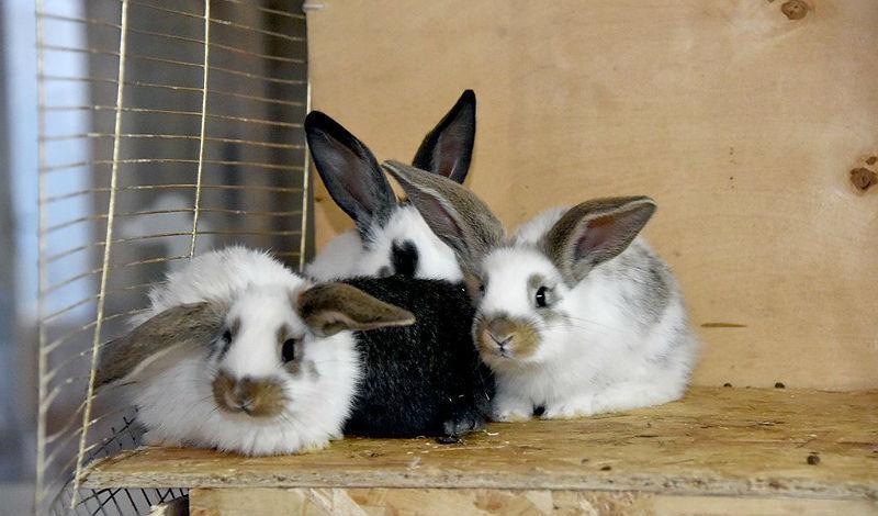 Разведение кроликов в домашних условиях - профилактика заболеваний