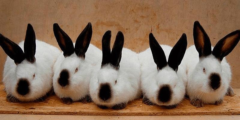 Разведение кроликов в домашних условиях - выгода