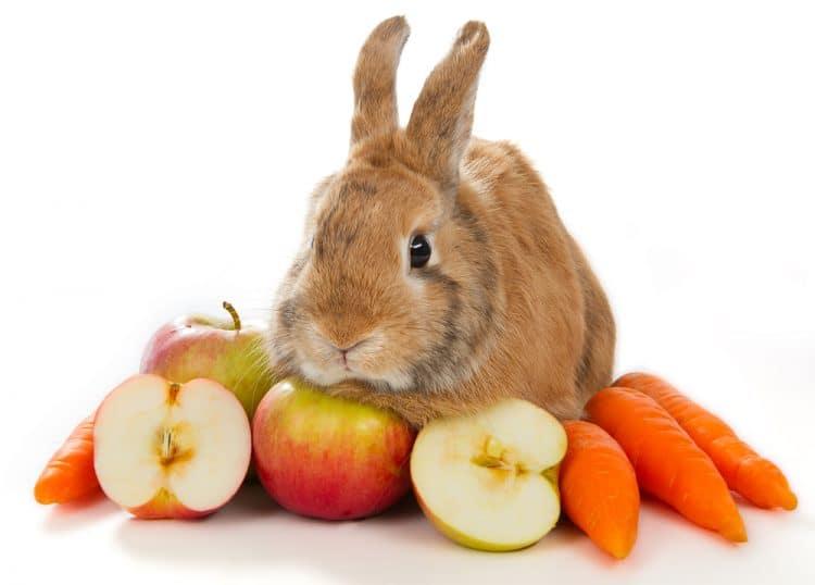 Фрукты для кроликов