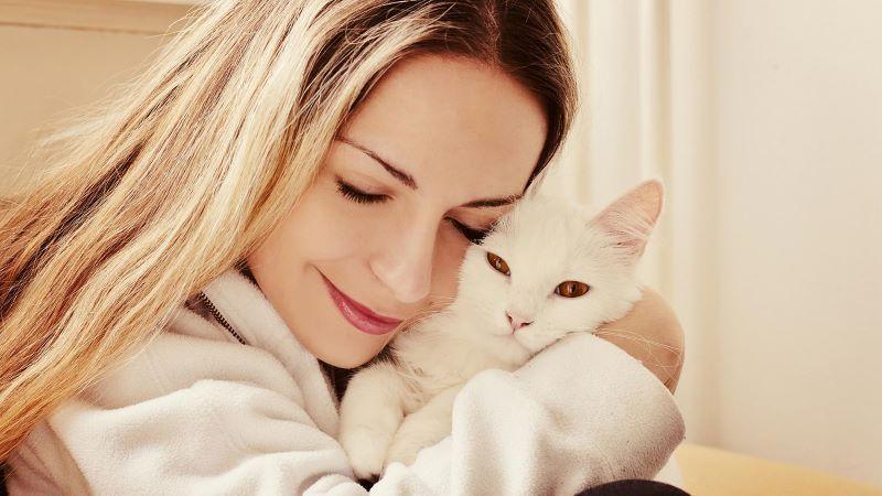 Сколько лет коту по человеческим меркам (1)