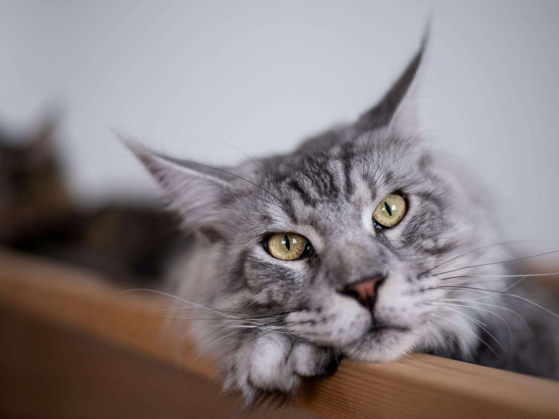 Сколько лет коту - старость