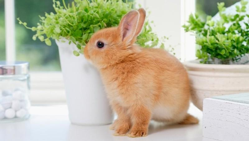 Все о декоративных кроликах
