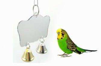 Зеркало для попугая - главное фото