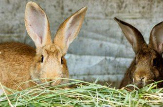 Зимний рацион домашних кроликов