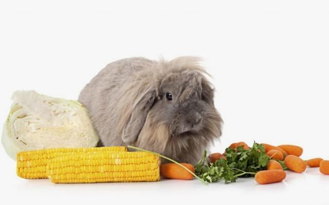 Зимний рацион домашних кроликов - сочные корма