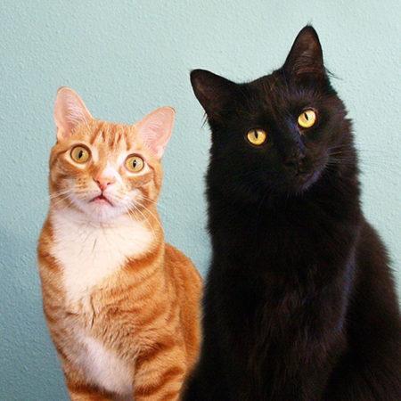 7 знаменитых котов интернета, у каждого из которых подписчиков больше, чем у любого из вас
