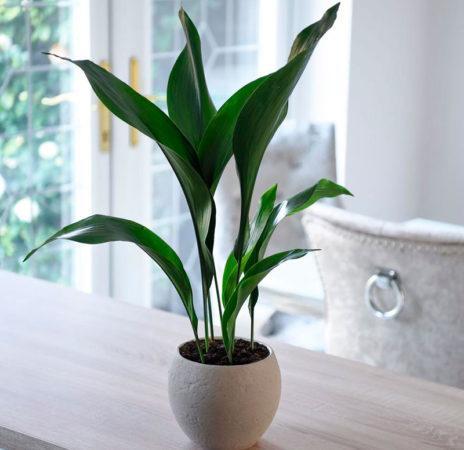 10 комнатных растений, безопасных для ваших собак и кошек
