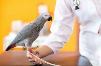 Аллергия на попугая - главное фото