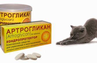 Артрогликан для кошек - главное фото