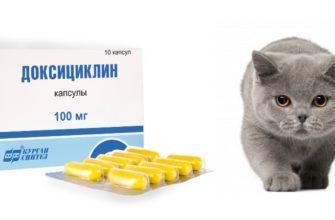 Доксициклин для кошек