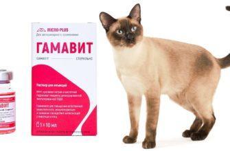 Гамавит для кошек - главное фото