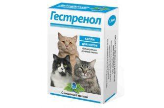Гестренол для кошек - главное фото