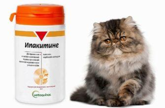 Как давать Ипакитине кошкам