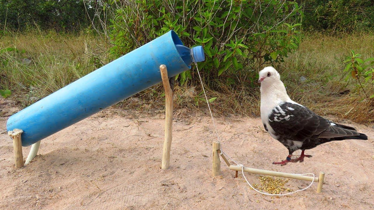Как сделать ловушку для голубей