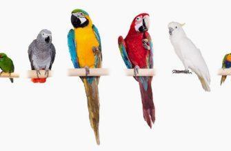 Какие попугаи подходят для квартиры