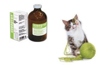 Ковертал при лечении кошки