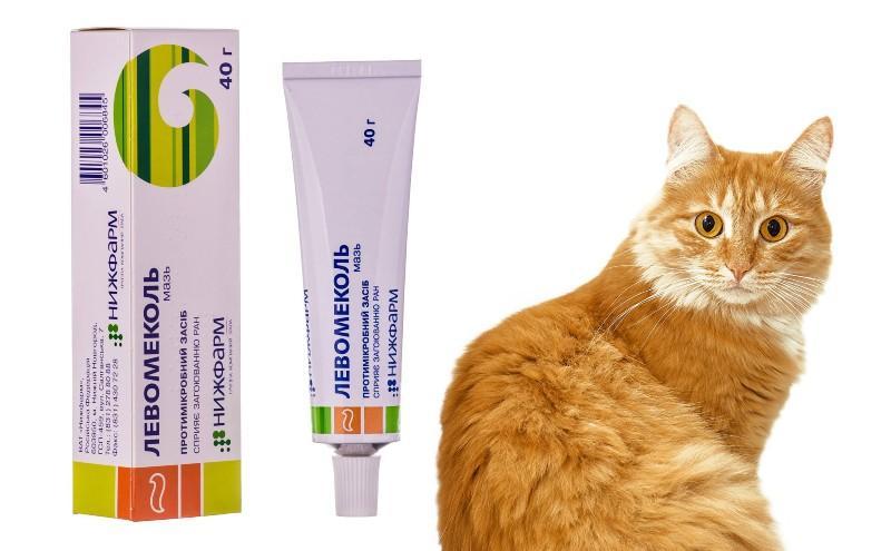 Левомеколь для кошек - главное фото
