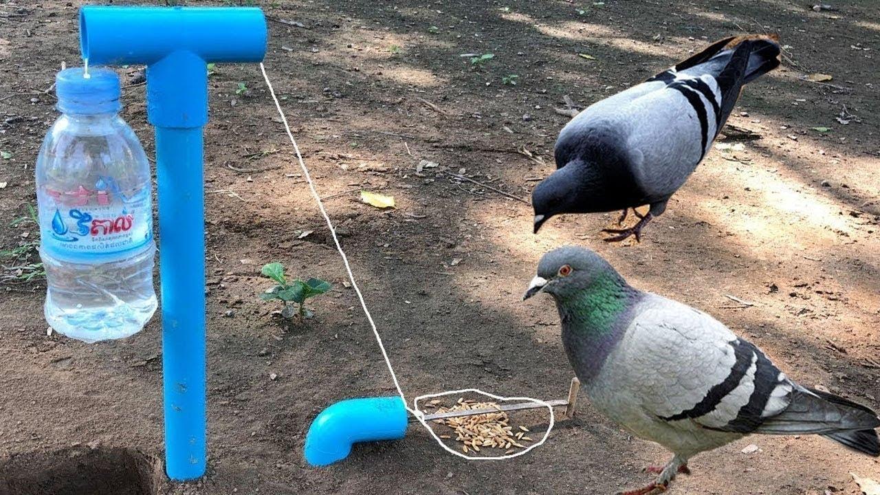 Ловля голубей на петлю