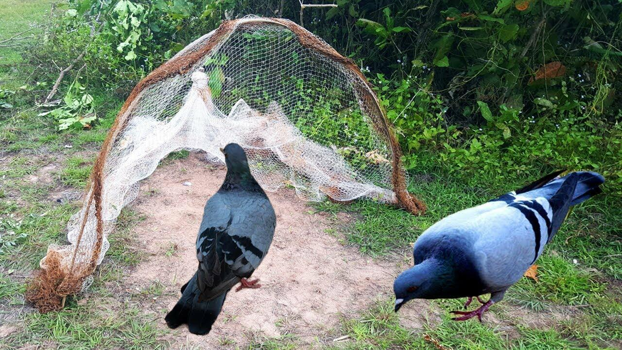 Ловушка для голубей - сетка