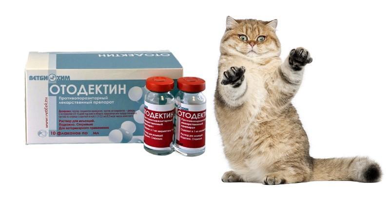 Отодектин для кошек - главное фото