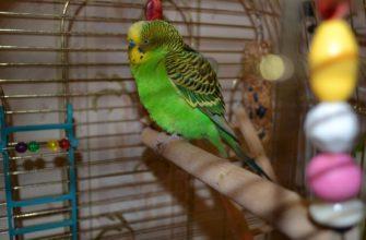 Попугай отказывается от еды - главное фото