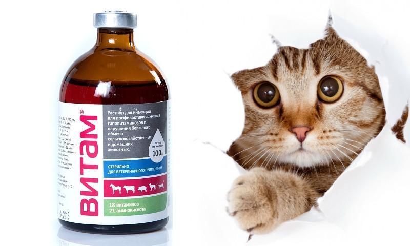 Витам для кошек - главное фото