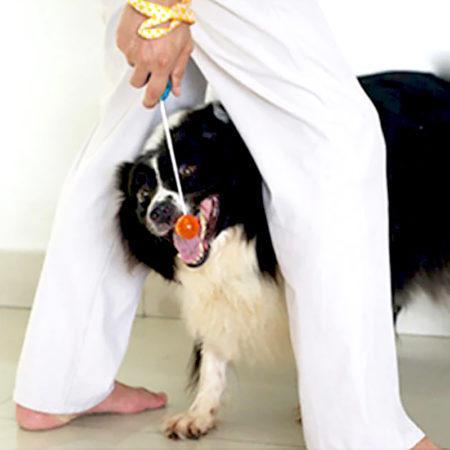 Лучшие товары на АлиЭкспресс для дрессировки собак