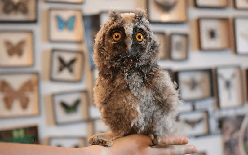 Домашняя сова - главное фото